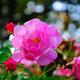 flowerchild29 image